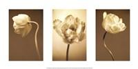 Caramel Blooms Framed Print