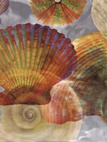 Shell Suite II Fine Art Print
