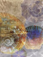 Shell Suite III Fine Art Print