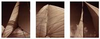 Windward Sails Triptych Fine Art Print