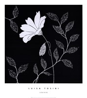 Levisia Fine Art Print