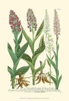 Lilac Blooms I Fine Art Print