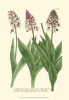 Lilac Blooms II Fine Art Print