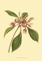 Tropical Ambrosia III Fine Art Print