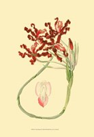 Le Fleur Rouge II Fine Art Print