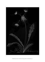 Dandelion Garden I Fine Art Print