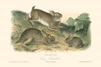Grey Rabbit Fine Art Print