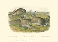 Worm-wood Hare Fine Art Print