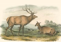 American Elk and Deer Fine Art Print
