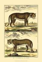 Panther and Leopard Fine Art Print