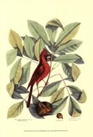 Red Bird and Hiccory Tree Fine Art Print
