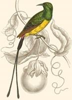 Hummingbird I Fine Art Print