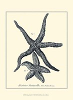 Indigo Starfish I Fine Art Print