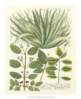 Greenery IV Fine Art Print