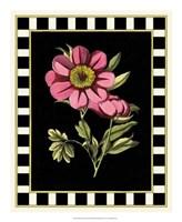 Pink Peony III Fine Art Print