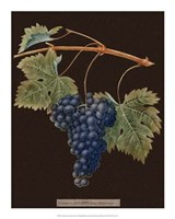 Purple Grapes Framed Print