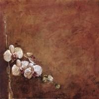 Orchid Series I (Simplicity I) Fine Art Print