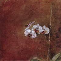 Orchid Series III (Simplicity III) Framed Print
