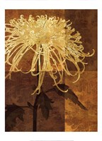 Golden Mums I Fine Art Print