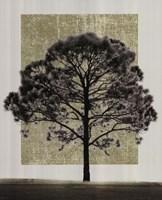 Natures Shapes I Fine Art Print