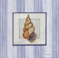 Sanibel Shell II Framed Print