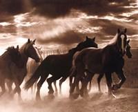 Running Horses & Sunbeams Fine Art Print