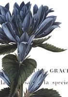 Botanique II Fine Art Print