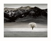 Solitary Tree Fine Art Print
