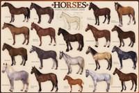 Horses Fine Art Print