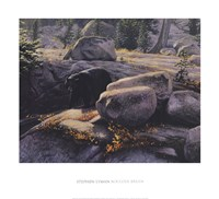 Boulder Bruin Fine Art Print