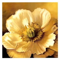 Poppy Portrait Fine Art Print