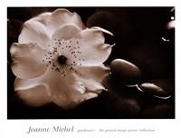Gardenia I Fine Art Print