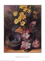 Apple Blossom & Primroses Fine Art Print