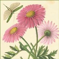 Pink Gerber Fine Art Print