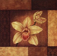 Cymbidium Orchid Framed Print