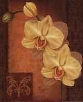 Golden Orchid II Framed Print