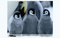 March of the Penguins Baby Penguins Fine Art Print