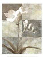 Memento I Framed Print