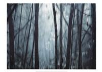 Spring Mist I Fine Art Print