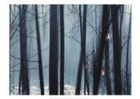 Spring Mist II Fine Art Print