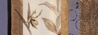 Serene Orchid I Framed Print