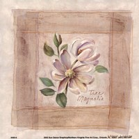 Tree Magnolia Framed Print