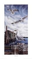Seagull Key Fine Art Print