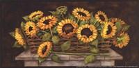 Flores del Sol Fine Art Print