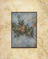 Giardino I Fine Art Print