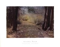 Silent Path Fine Art Print