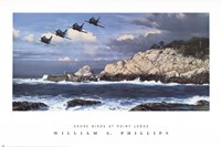 Shorebirds at Point Lobos Fine Art Print