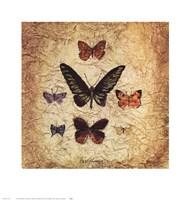 Papillons III Fine Art Print