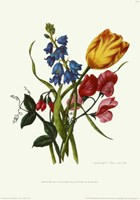 Bouquet with Tulipa Gesneriana Fine Art Print