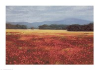 French Poppy Fields Fine Art Print